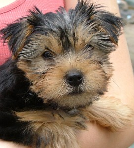Think of re-training your brain as training a sweet little dog. Reward it for positive behaviors, nothing else.