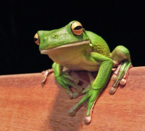 Why a frog? Keep reading ... .