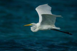 bird-in-flight